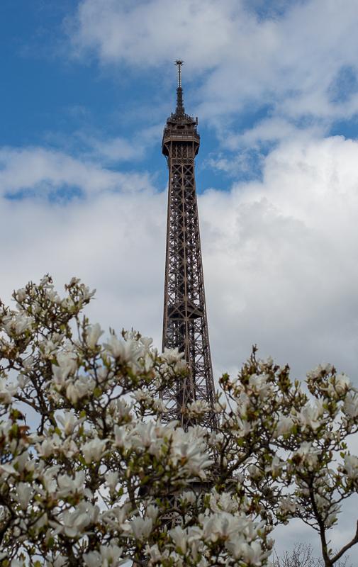EiffelAndFloweringTree