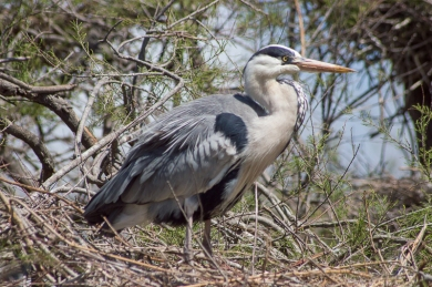 StorkGrounded