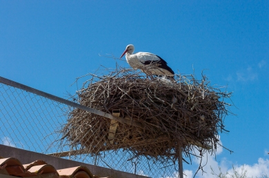 StorkUp